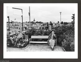 20. Glasspinne, 1973